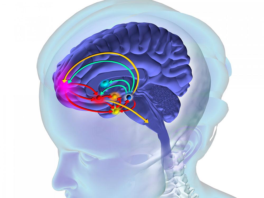 En este momento estás viendo El impacto de las drogas en el cerebro